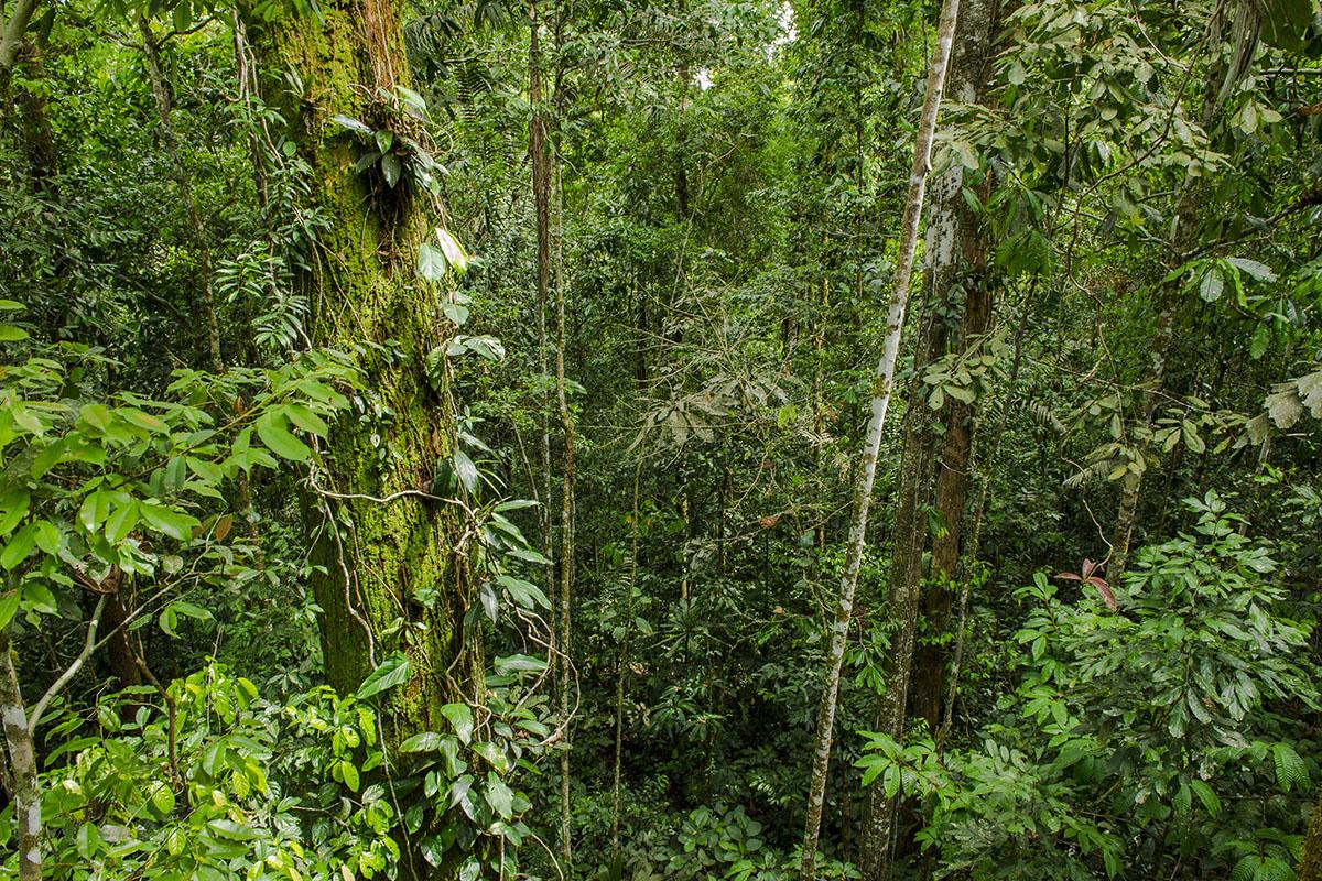 <p><strong>Deštný prales Yasun</strong>, Ekvádor</p>