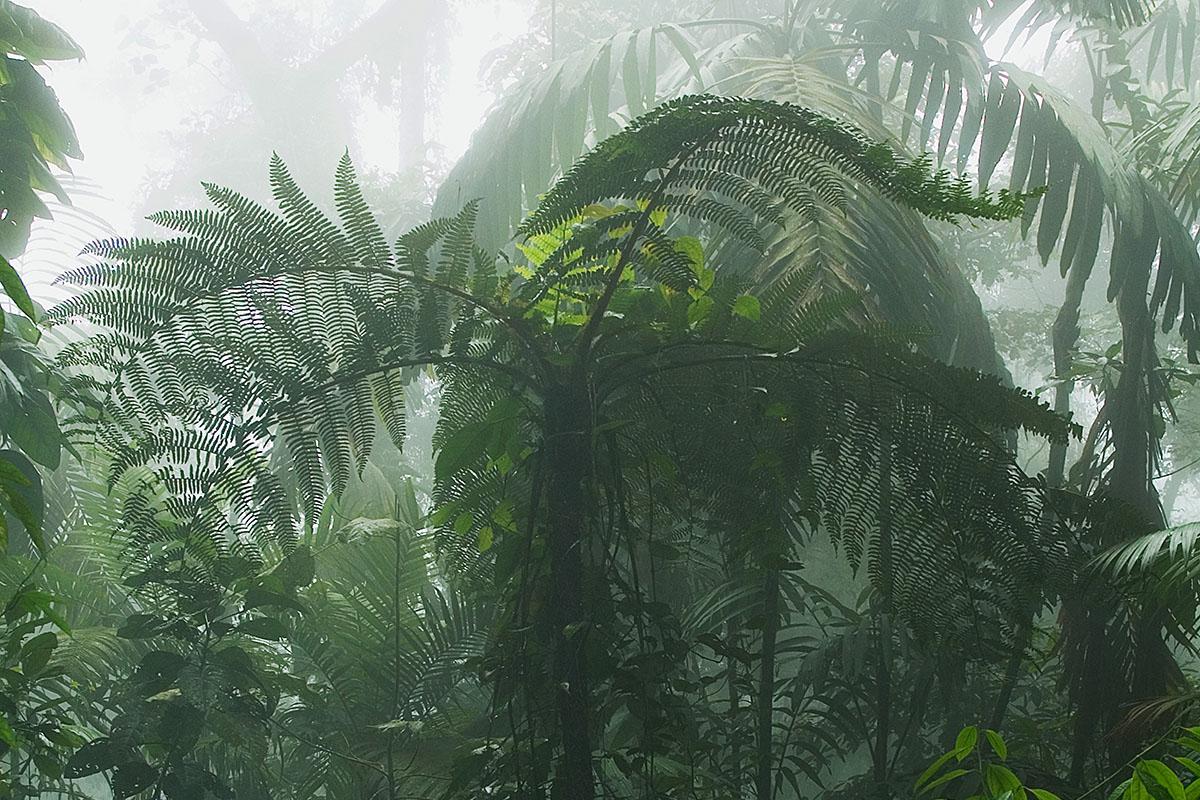 <p><strong>Mlžný les</strong> Rancho Grande, Venezuela</p>
