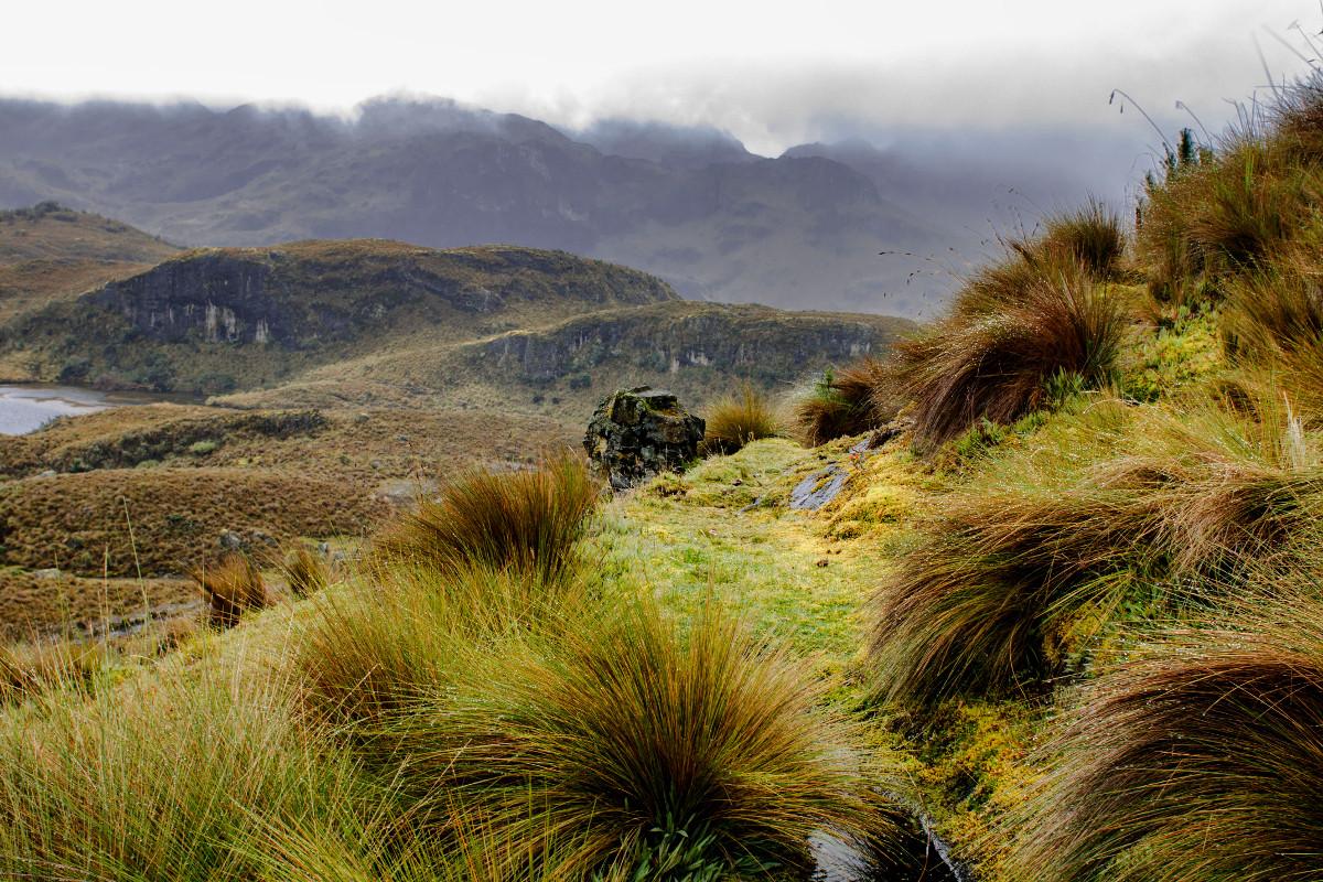 <p><strong>Cajas (Andes)</strong> Ecuador</p>