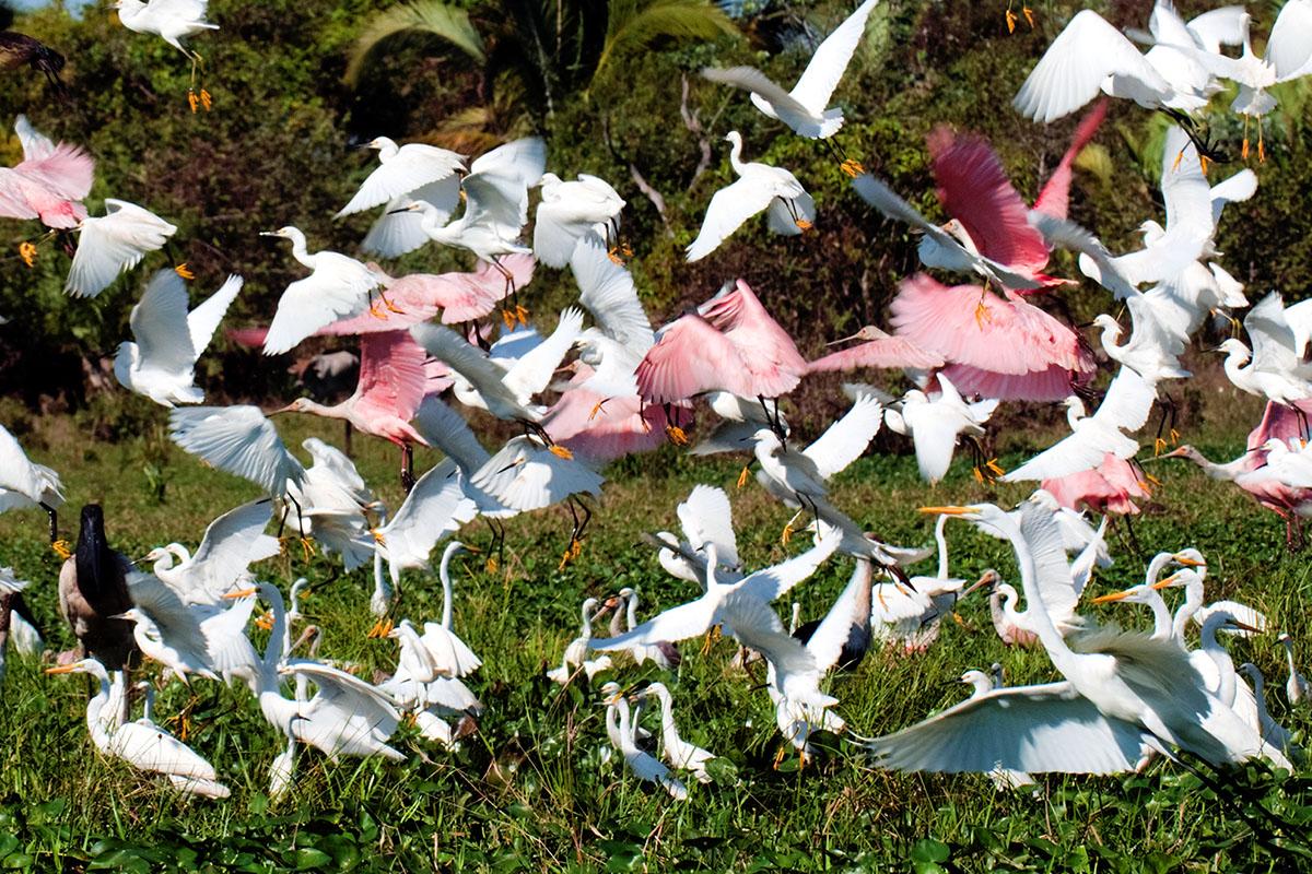 <p><strong>Wading birds</strong> Llanos, Venezuela</p>